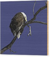 American Bald Eagle 1 Wood Print