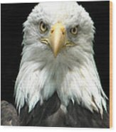 American Bald Eagle 2 Wood Print