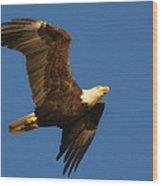 American Bald Eagle Close-ups Over Santa Rosa Sound With Blue Skies Wood Print
