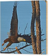 American Bald Eagle I Mlo Wood Print