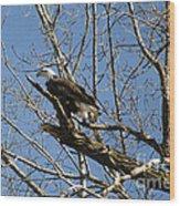 American Bald Eagle In Illinois Wood Print