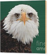 American Bald Eagle On The Look Out Wood Print