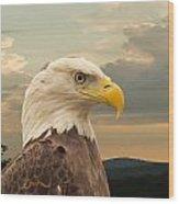 American Bald Eagle With Peircing Eyes Wood Print by Douglas Barnett