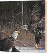 American Bald Eagles Wood Print