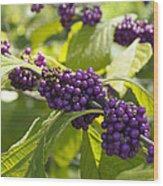 American Beautyberry -callicarpa Americana Wood Print