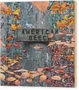 American Beech Wood Print