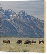 American Bison Herd Wood Print