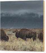 American Bison On The Prairie Wood Print
