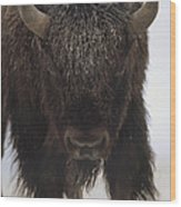 American Bison Portrait Wood Print by Tim Fitzharris