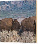 American Bison Trio Wood Print