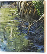 American Bittern - Keeping A Low Profile Wood Print