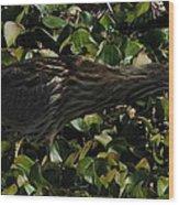 American Bittern Wood Print