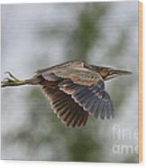 American Bittern Pictures 3 Wood Print