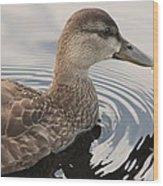 American Black Duck Wood Print