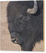 American Buffalo No.2 Wood Print