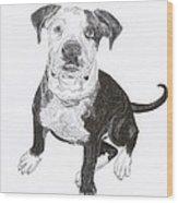 American Bull Dog As A Pup Wood Print