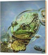 American Bull Frog Wood Print