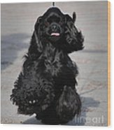 American Cocker Spaniel In Action Wood Print by Camilla Brattemark