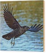 American Crow Flying Over Water Wood Print