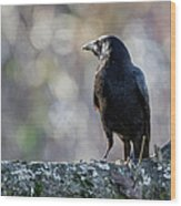 American Crow Square Wood Print