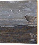 American Dipper   #5851 Wood Print