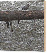 American Dipper   #7963 Wood Print