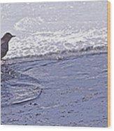 American Dipper   #8163 Wood Print