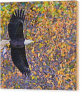 American Eagle In Autumn Wood Print