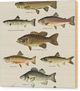 American Game Fish Wood Print