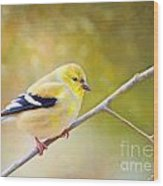 American Goldfinch - Digital Paint Wood Print