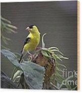 American Goldfinch 5 Wood Print