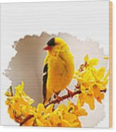 American Goldfinch Branch Of Forsythia Wood Print