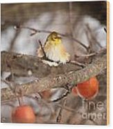 American Goldfinch In Winter Wood Print