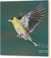American Goldfinch Male-flying Wood Print