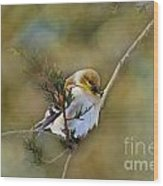 American Goldfinch On A Cedar Twig - Digital Paint Wood Print