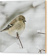 American Goldfinch Up Close  Wood Print