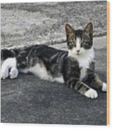 American Grey Tiger Stripe Kitten Portrait Wood Print