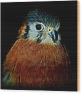 American Kestrel Digital Art Wood Print