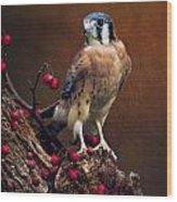 American Kestrel II Wood Print