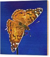 American Lady Butterfly Blue Square Wood Print