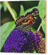 American Lady Butterfly Wood Print