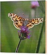American Lady Butterfly In Garden Wood Print