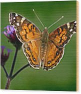American Lady Butterfly With Green Background Wood Print