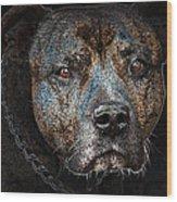 American Mastiff Wood Print