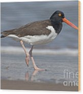 American Oystercatcher On Beach Wood Print
