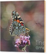 American Painted Lady Butterfly 2014 Wood Print