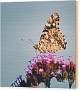 American Painted Lady Butterfly Blue Background Wood Print
