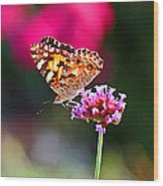 American Painted Lady Butterfly Pink Wood Print