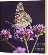 American Painted Lady Butterfly Purple Background Wood Print