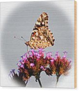 American Painted Lady Butterfly White Square Wood Print